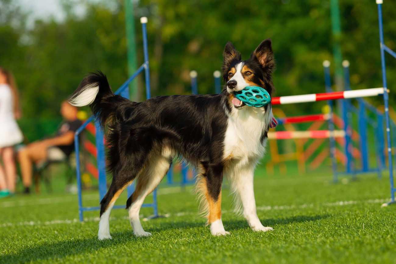 Dog Park Bellevue, WA