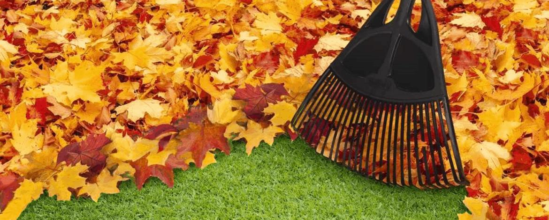 Leaf Cleanup Bellevue, WA