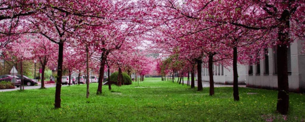 Spring Cleanup Bellevue, WA